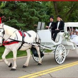 Buggies and Things Horse Drawn Carriage Service
