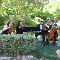 Organic String Quartet