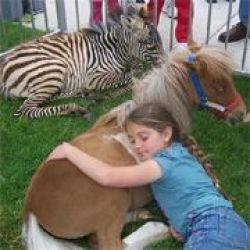 Giddy Up Ranch ~ Petting Zoo, Camel & Pony Rides