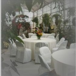 Specialty Linens and Chair Covers