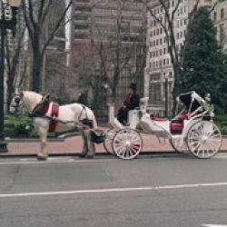 Bridal Carriage Co
