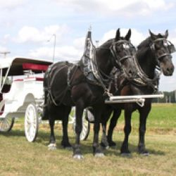 Spring Mist Farms - Horse Drawn Carriage