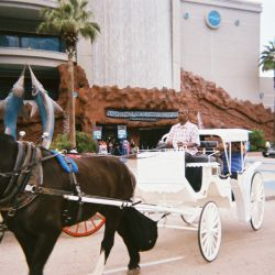 Vintage Carriage Company, LLC