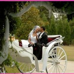 Yellow Rose Carriage Service